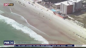 Experts say COVID-19 is leading to less shark bites