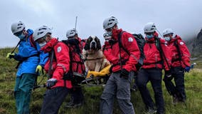 St. Bernard dog rescued on England's highest mountain