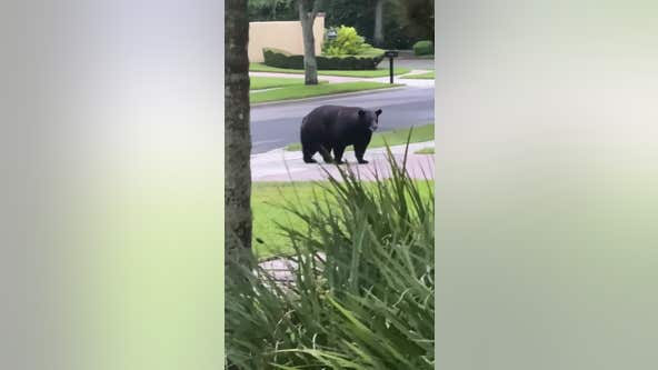 Bear spotted in Central Florida neighborhood