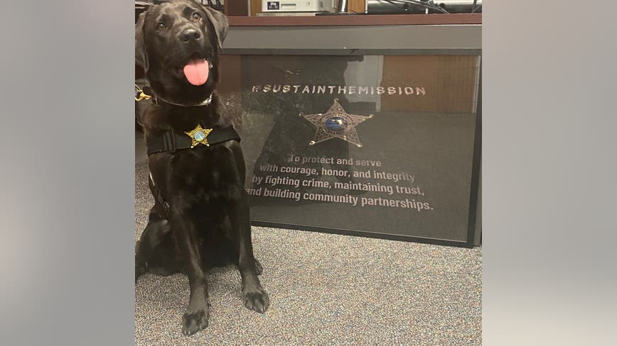 Welcome, K9 Zen! Volusia County Sheriff's Office acquires K9 trained to assist in sex offender investigations