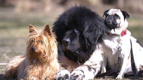 North Carolina dog diagnosed with COVID-19 dies