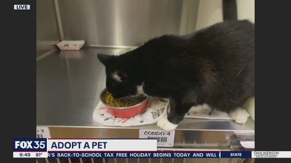 Adopt a pet: Cat adoption