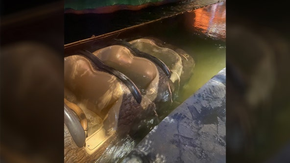 Splash Mountain ride vehicle became submerged underwater with guests on board, video shows