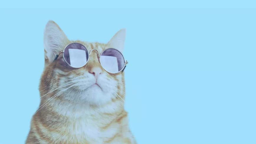 Happy International Cat Day! Here are 10 fun facts about cats