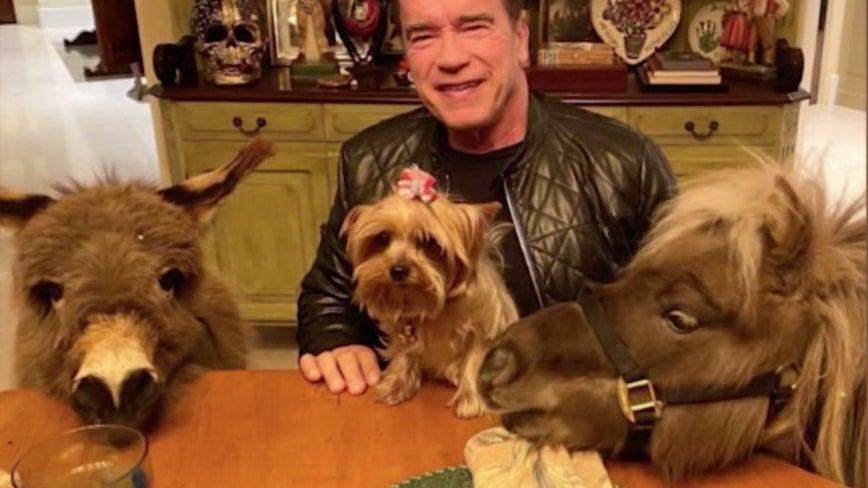 Arnold Schwarzenegger describes quarantine life with pet donkey and mini horse