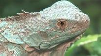 Animal smuggling and the exotic animal world