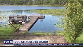 VIEWER DISCRETION: Video shows pet dog attacked by alligator