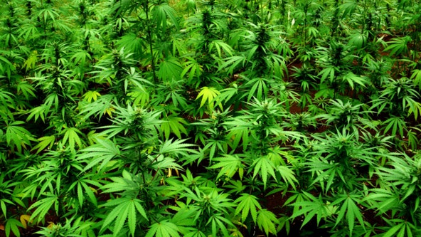 'It's really long overdue' Florida lawmakers push to legalize recreational marijuana