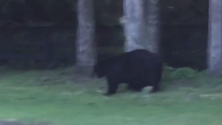 Dog killed by bear at Central Florida neighborhood