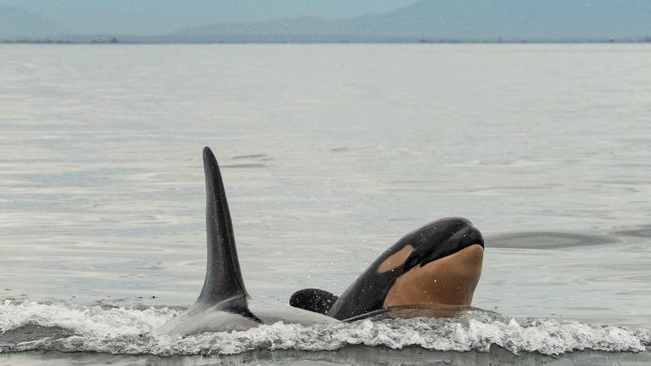 Orca-3-FOR-WEB.jpg