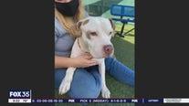 Adopt-a-pet: Meet Tonka