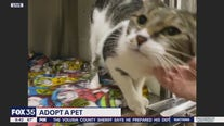 Adopt-a-pet: Cats up for adoption