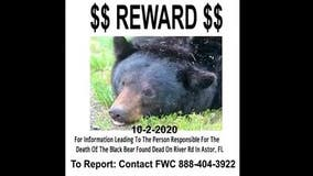 Reward offered for information on who killed bear in Astor