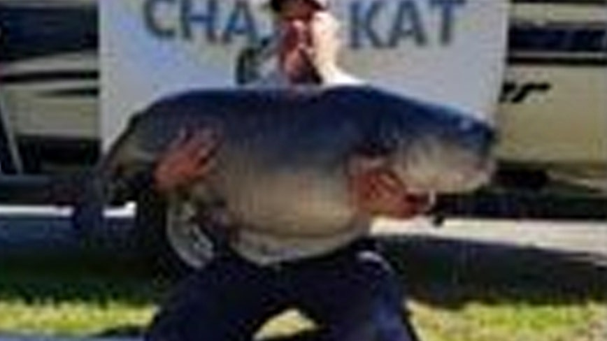 Florida fisherman shatters Georgia's blue catfish record with 111-pound catch, says holding it up 'was hell'