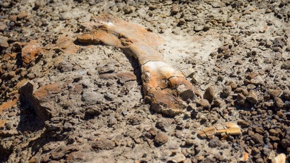 canada-fossils-2.jpg