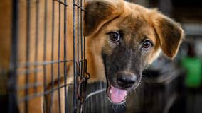 Florida animal shelter sees recent increase in pet abandonment