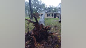 Tree crashes down on Marion County home, just missing child