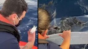 Coast Guard helps release 200 baby sea turtles off the Florida coast