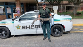 Florida deputies remove alligator from school playground, release it into river