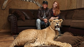 Netflix's 'Tiger King' star Jeff Lowe accused of inhumane treatment, improper handling of animals