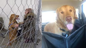 After nearly a year lost in the woods, golden retriever reunites with owner