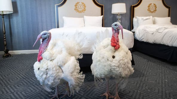 PHOTOS: Presidential turkeys arrive in DC ahead of annual pardon
