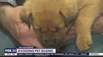 Avoiding pet scams