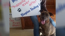 Dog that spent over 840 days in shelter is finally adopted
