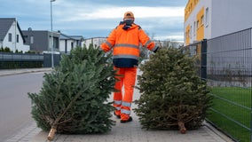 Christmas trees: When and how should you throw them out?