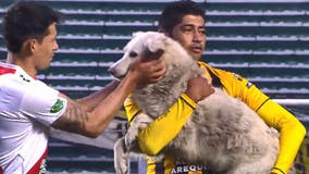 Soccer player adopts stray dog who took to field during match in Bolivia