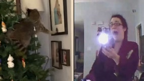 Florida woman finds raccoon in Christmas tree, chaos ensues in wild video