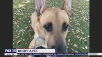 Adopt-A-Pet: Sal
