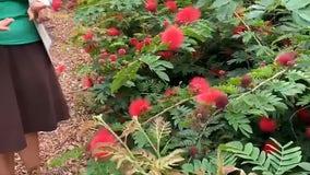 Oviedo's Mayor Sladek proposes edible plants in public parks