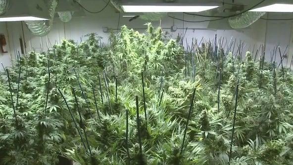 Judge OKs online medical marijuana ordering in Florida