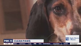 Research suggests dogs get bad rap on cleanliness