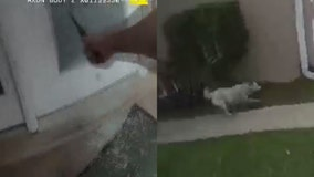 Video: Florida deputy breaks door window to help dog escape house fire