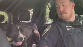 Florida officers take shelter dogs on ride-along to help them find forever homes