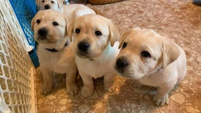 WATCH: Nonprofit launches live puppy cam of canine companions