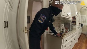 Police use dog toys to entice coyote out of South Carolina woman's kitchen