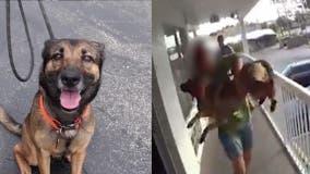 Dog thrown from Daytona Beach balcony to become service animal for veteran