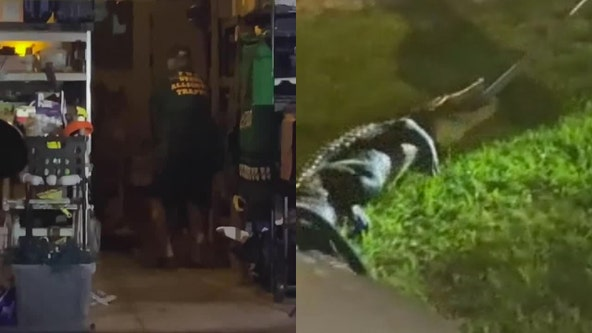 Florida woman finds gator hissing by door inside garage