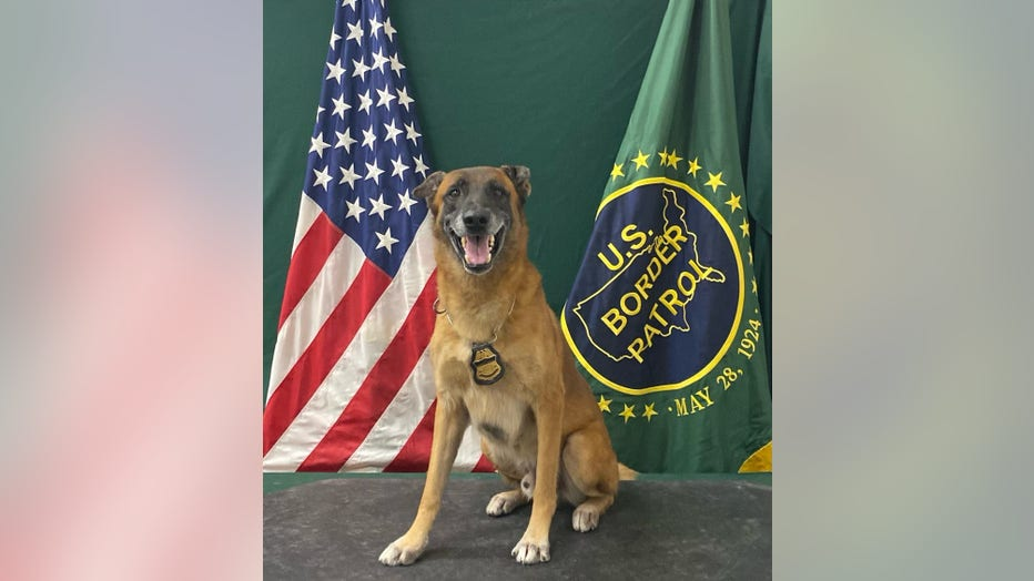 Retired Border Patrol K-9 Officer, Kirpy. Courtesy of US Customs and Border Protection