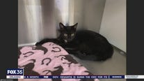 Adopt-a-pet: Cute kittens up for adoption