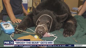 Brody the bear gets MRI