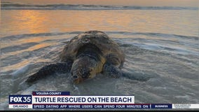 Turtle rescued along Central Florida beach