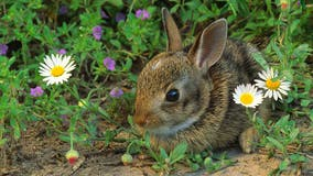 Easter Bunny to bring cool, breezy weekend to Central Florida