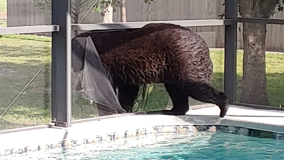 bear-pool-naples-2.jpg
