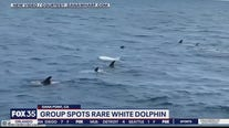 Group spots rare white dolphin