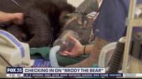 Checking in on 'Brody the Bear'