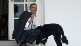 The Obamas announce death of beloved dog, Bo, after battle with cancer